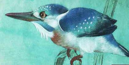 中国画工笔画翠鸟教程步骤详解