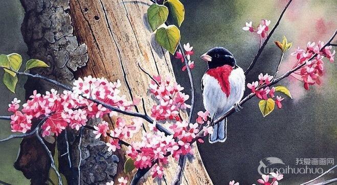 画家Susan Bourdet水彩花鸟画作品赏析