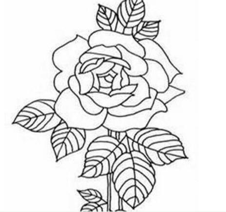素描牡丹花的绘画步骤教程