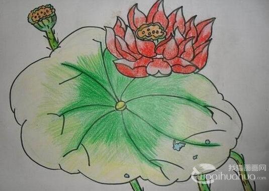 儿童画水彩画作品:漂亮的荷花