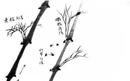 国画中竹子的画法