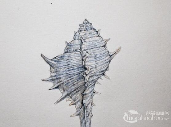 彩铅之贝壳的绘画教程