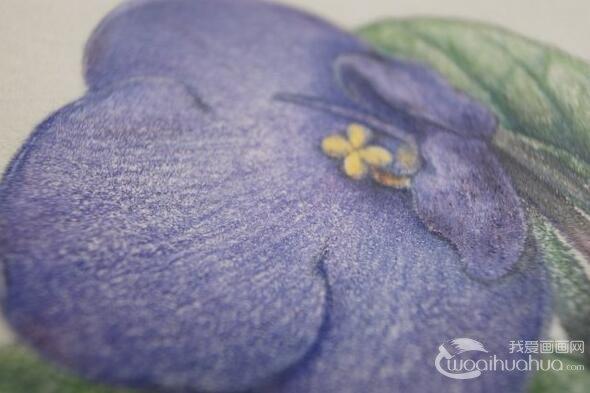 绘画教程:叶子的画法