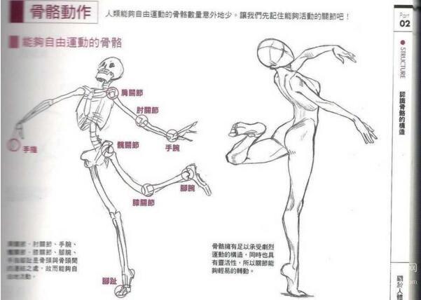 根据人体骨骼的构造来画画