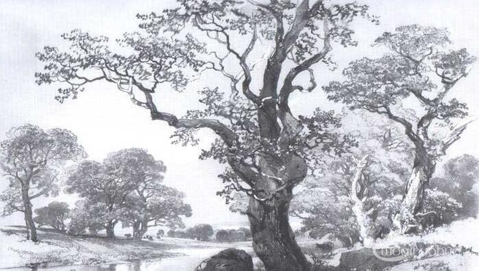 国画教程:树的画法与画树的技法