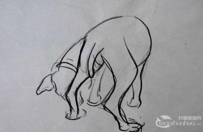 关于狗的速写图片 简练线条速写狗作品六副