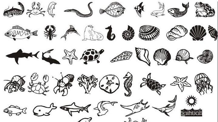 海洋动物和海洋生物简笔画图片大全_七维网