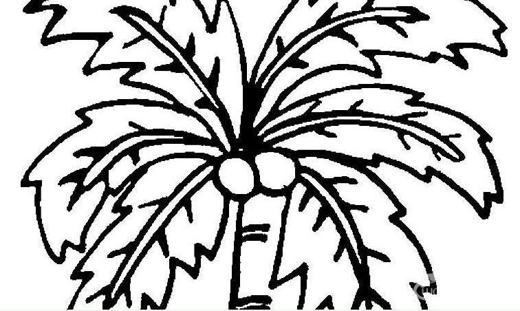 椰树简笔画,椰子树简笔画图片大全