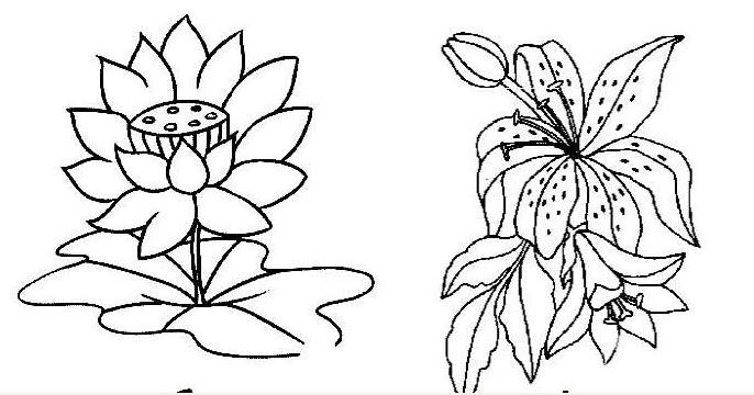 花朵简笔画图片大全,各种各样的花儿简笔画-简笔画花 我爱画画网