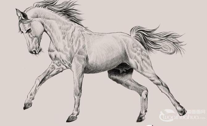 关于马的铅笔画素描作品:骏马铅笔画图片