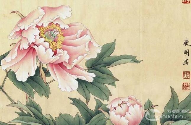 粉红工笔牡丹绘画教程_李晓明工笔牡丹画法