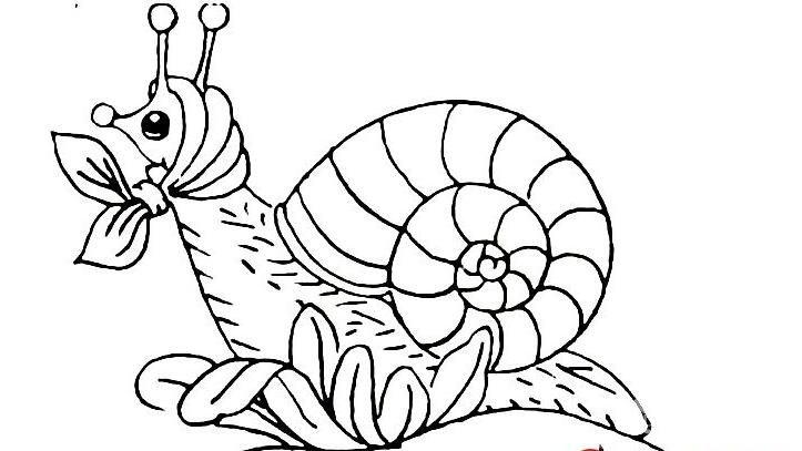 幼儿简笔画蜗牛:可爱小蜗牛简笔画图片大全