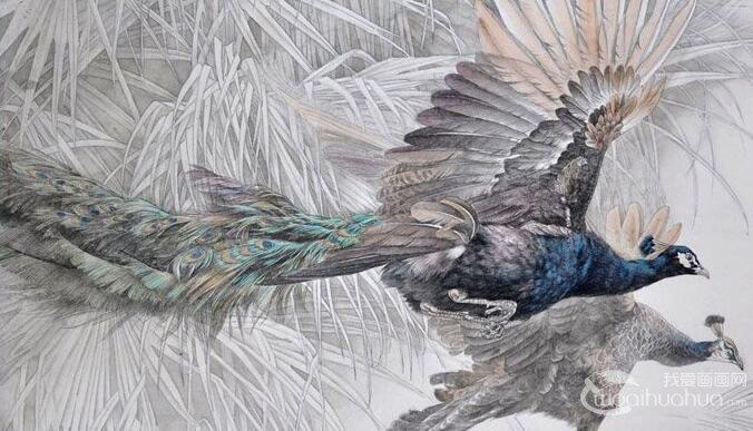 国画孔雀教程:工笔花鸟画孔雀的画法图文步骤
