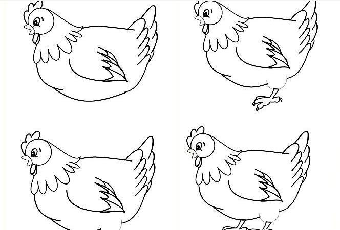 简笔画老母鸡画法:较为复杂的老母鸡线描简笔画教程
