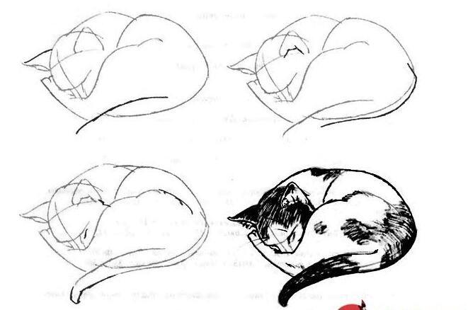 猫的22种画法(22)蜷缩在一起睡觉的的猫线描速写教程