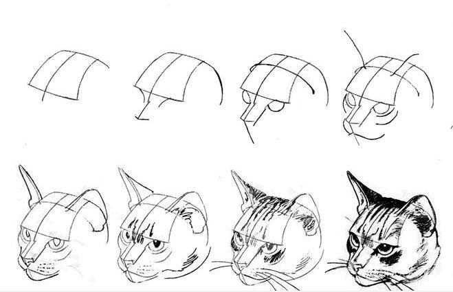 猫的22种画法(17)猫的头部五官线描速写教程