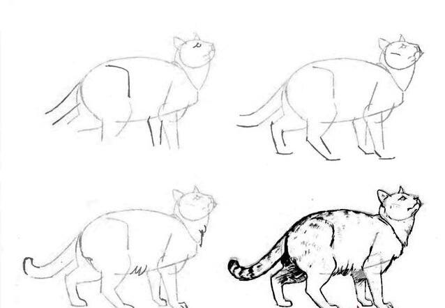猫的22种画法(21)仰头张望的猫姿势线描速写教程
