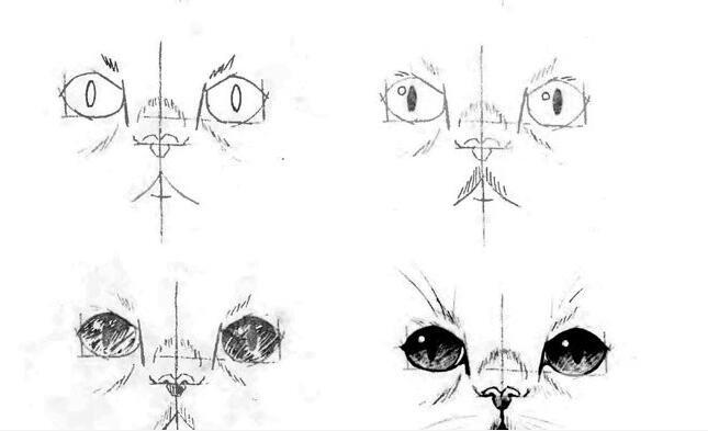 猫的22种画法(16)猫的脸部五官线描速写教程
