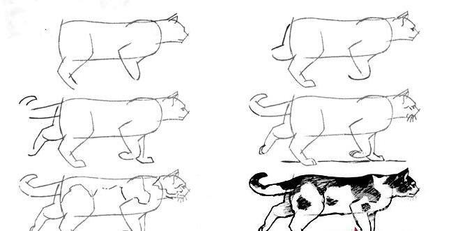 猫的22种画法(15)行走中的黑白花猫线描速写教程