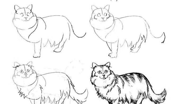波斯猫的线描速写素描画法教程