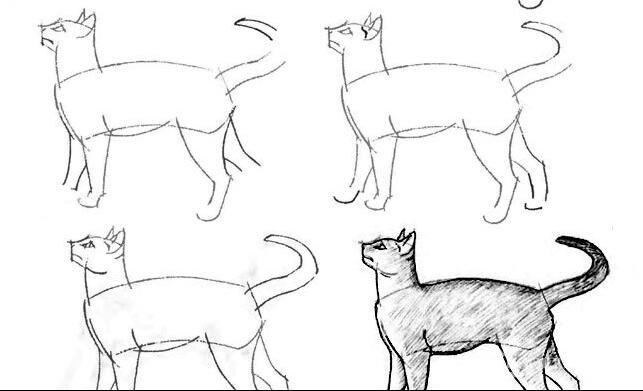 猫的22种画法(11)猫咪线描速写教程之正侧面站立图姿