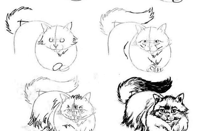 猫的22种画法(10)猫咪线描速写教程之匍匐在地正面图