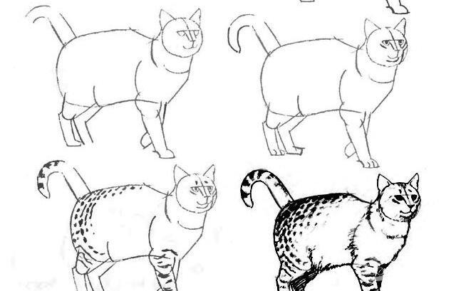 猫的22种画法(9)猫咪线描速写教程之狸猫行走姿势