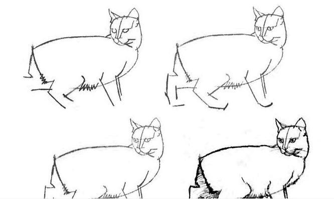 猫的22种画法(8)猫咪线描速写教程之回首侧面姿态