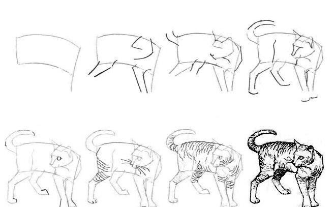 猫的22种画法(7)猫咪线描速写教程之2/3站立姿势