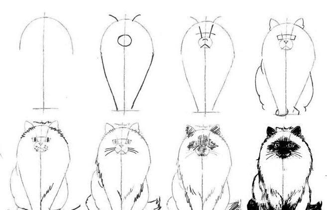 猫的22种画法(3)线描速写教程之正面蹲卧姿势