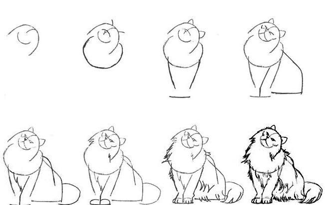 猫的22种画法(1)猫咪线描速写教程之蹲卧姿势波斯猫