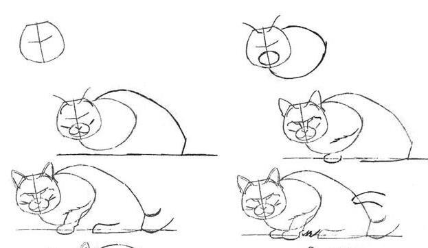 猫的22种画法(4)猫线描速写教程之侧面趴伏姿势