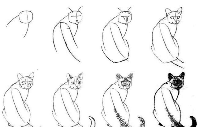 猫的22种画法(5)猫的线描速写教程之蹲卧背面猛回首姿势