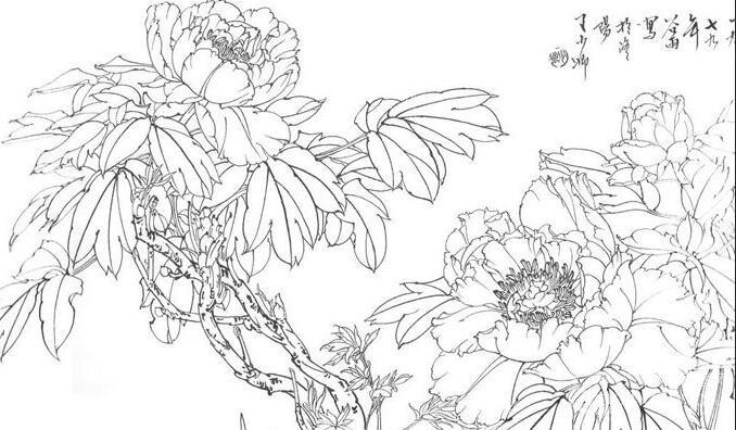 工笔画白描牡丹图片大全,线描牡丹花图谱系列