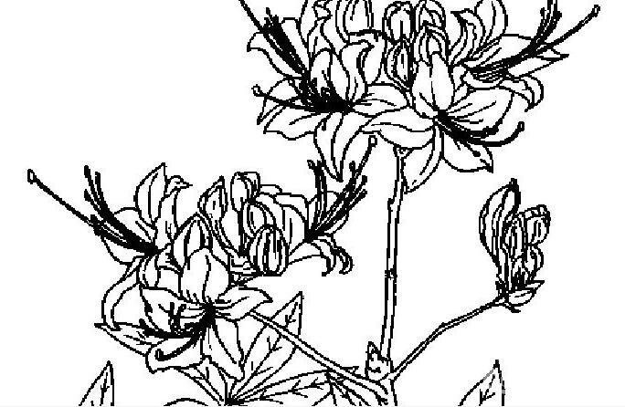 简笔画花卉大全,各种植物花儿简笔画图片26副(上)