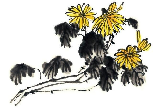 水墨菊花的绘画教程