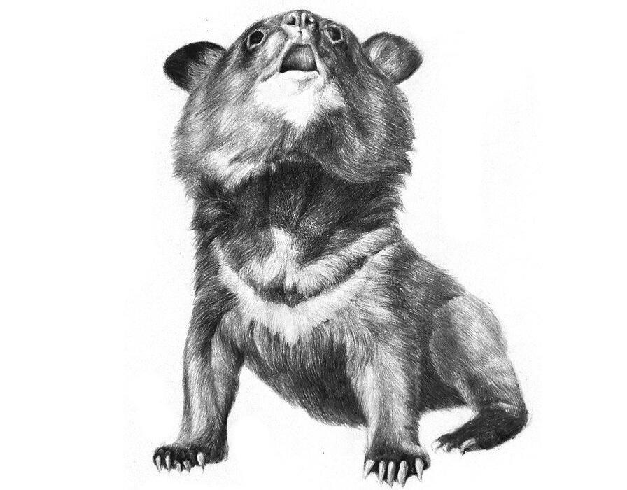 动物素描_我爱画画网