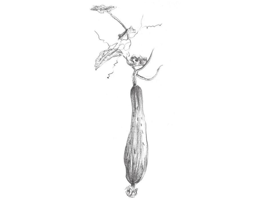 素描丝瓜的绘画技法