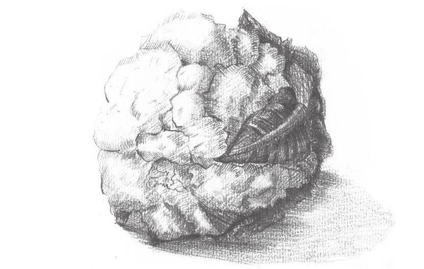 素描菜花的绘画技法
