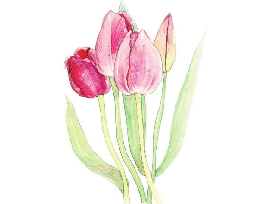 水彩郁金香的绘画教程