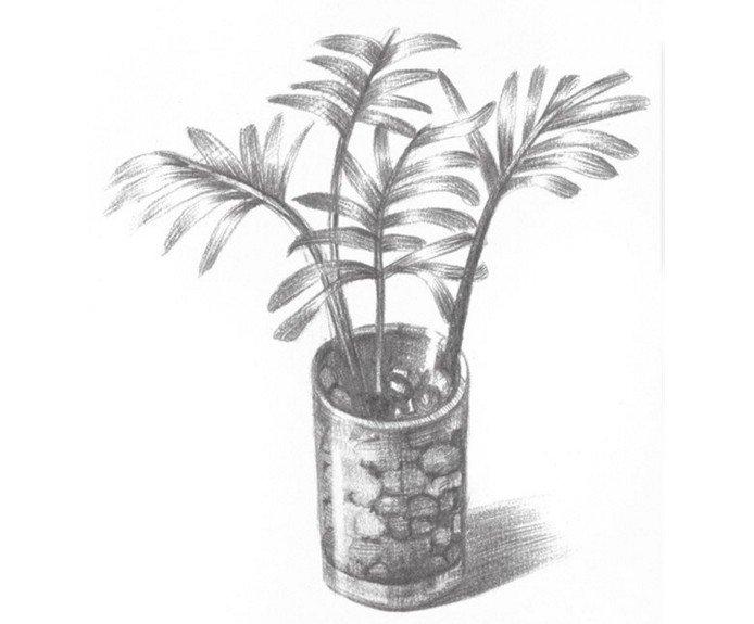 素描椰子树的绘画教程