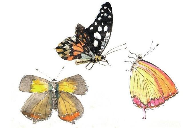 国画蝴蝶的绘画技法