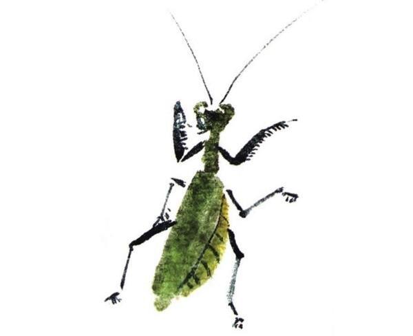 国画螳螂的绘画步骤