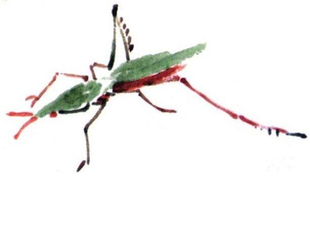 国画蚂蚱的绘画技法