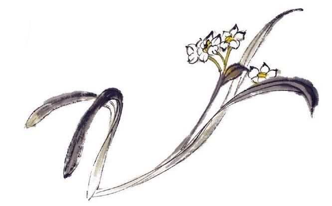 水墨水仙的绘画教程