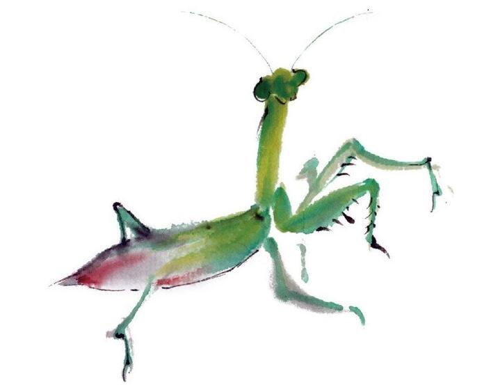 水墨螳螂的绘画技法