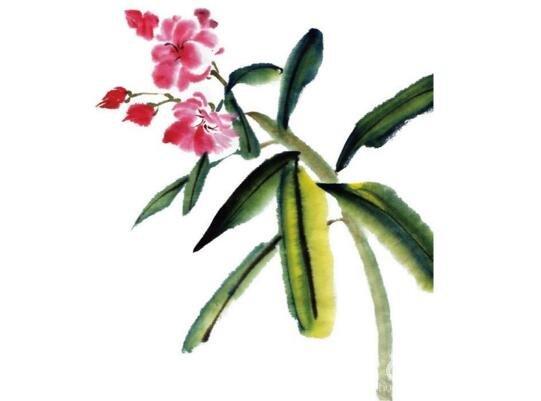 水墨夹竹桃的绘画步骤