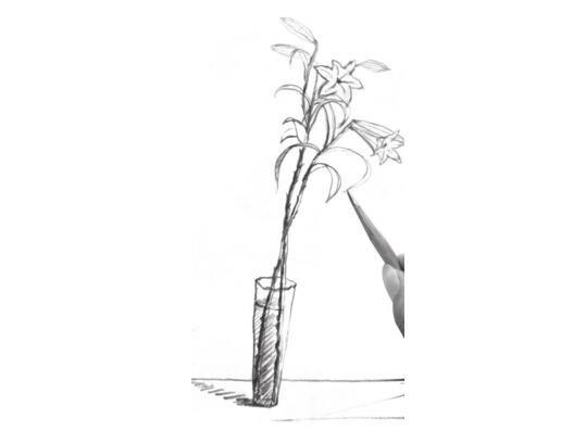 白描百合花绘画步骤(3)