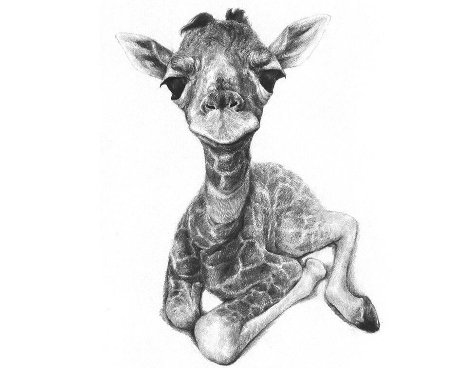 素描长颈鹿的绘画技法