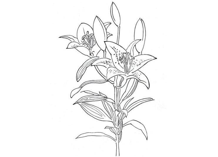 花素描画图片大全步骤 素描玫瑰花的画法步骤彼岸